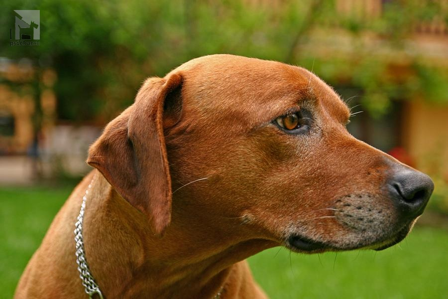 Galériu psíka pridal používateľ roliyak