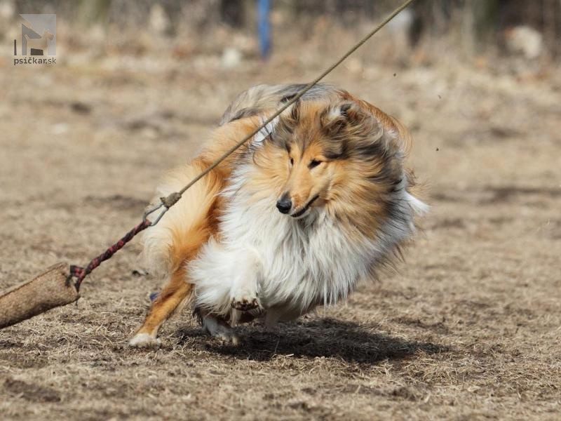 Galériu psíka pridal používateľ terik