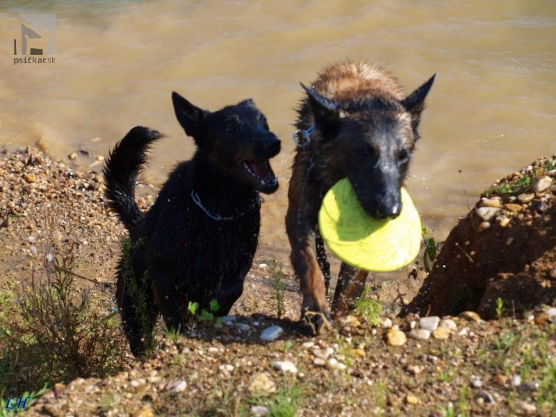 Galériu psíka pridal používateľ Achady