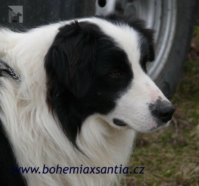 "<a href=""http://bohemiaxsantia.cz"" target=""_blank"">Bohemia Xantia</a>"