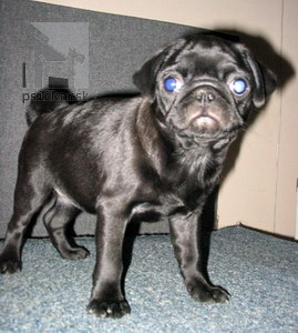 "<a href=""http://www.pug.sk"" target=""_blank"">MAD-MOPS</a>"