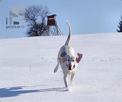 "<a href=""http://roborovski.web-dog.net"" target=""_blank"">Roborovski</a>"