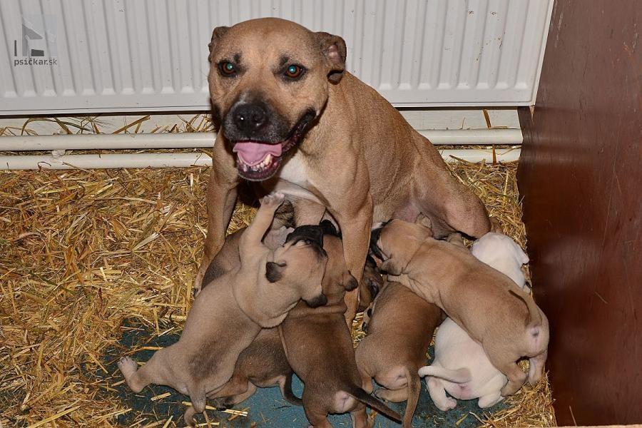 "<a href=""http://www.pitbullterrier.cz/"" target=""_blank"">Brixa´s Kennel</a>"
