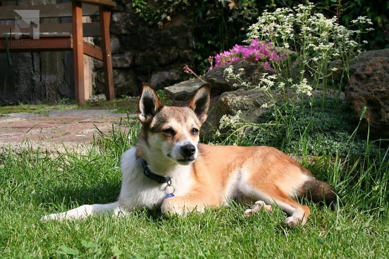 """<a href=""""http://www.lundehund.cz/station.php?lang=cs&amp;noHead=1&amp;show=showZA&amp;article=0"""">Det Norske Flaket</a>"""