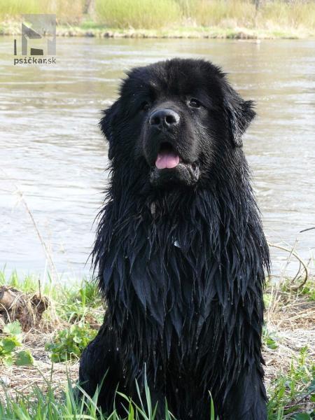 Galériu psíka pridal používateľ Věrča - Pegy