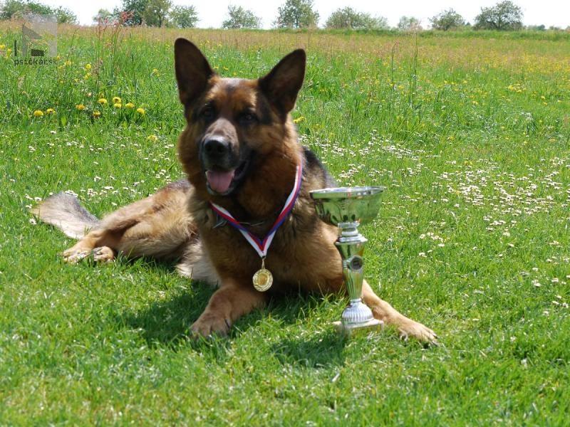 Bonniel-dog - Tacco Clark