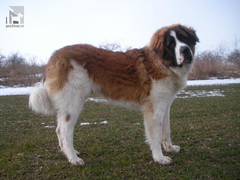 Galériu psíka pridal používateľ edmontcz
