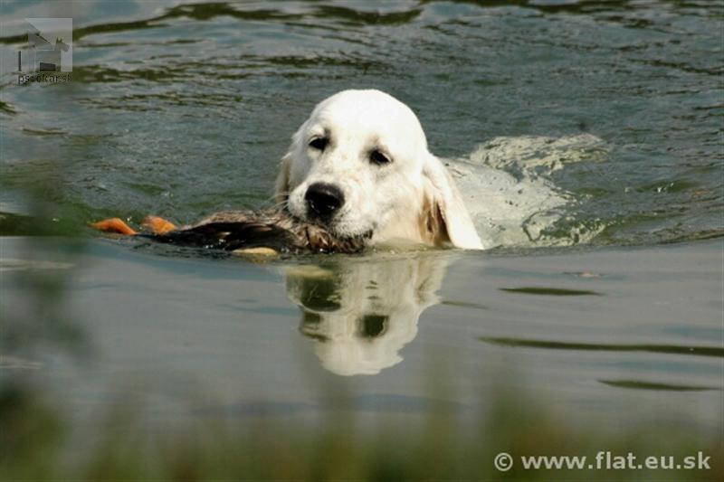 Galériu psíka pridal používateľ My Joy