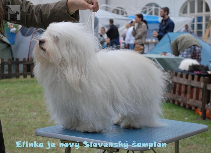 Galériu psíka pridal používateľ Zenóbia
