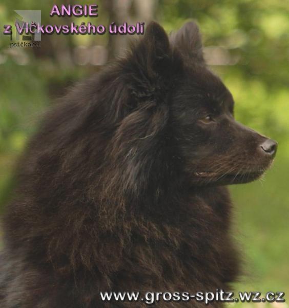 Galériu psíka pridal používateľ Vitonská