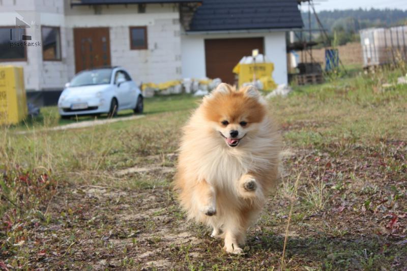 Galériu psíka pridal používateľ poms ad astra