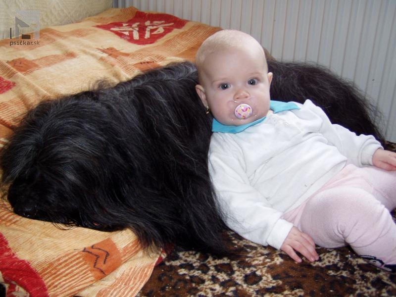 Galériu psíka pridal používateľ Drog-Tso
