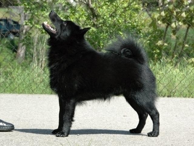 """Galériu psíka pridal používateľ <a href=""""mailto:marie.studecka@seznam.cz"""">marie.studecka@seznam.cz</a>"""