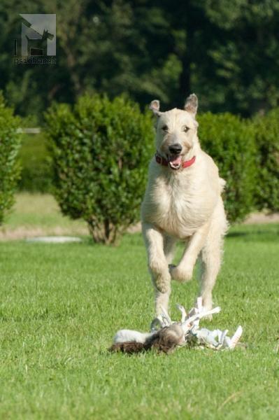 Galériu psíka pridal používateľ Pavlina Polcicova