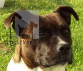 Galériu psíka pridal používateľ gotis