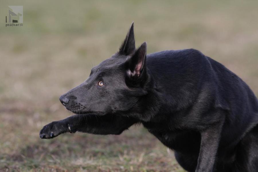 Galériu psíka pridal používateľ Lucia Dobríková