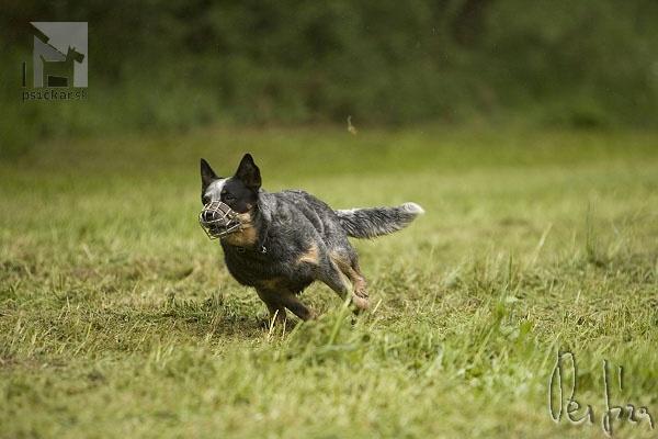Galériu psíka pridal používateľ danggali