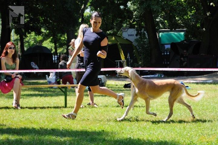 Galériu psíka pridal používateľ Arshan
