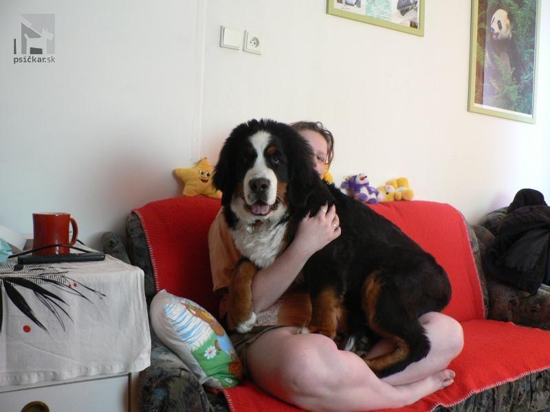 Galériu psíka pridal používateľ BullBeCa