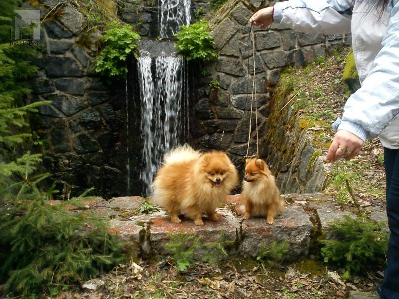 Galériu psíka pridal používateľ ORANŽOVÁ KULIČKA