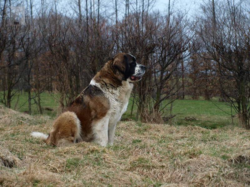 Galériu psíka pridal používateľ Olga
