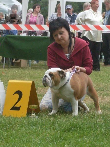 Galériu psíka pridal používateľ Kamila M.