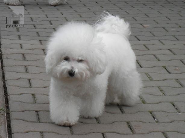 Galériu psíka pridal používateľ Radka Vanclova