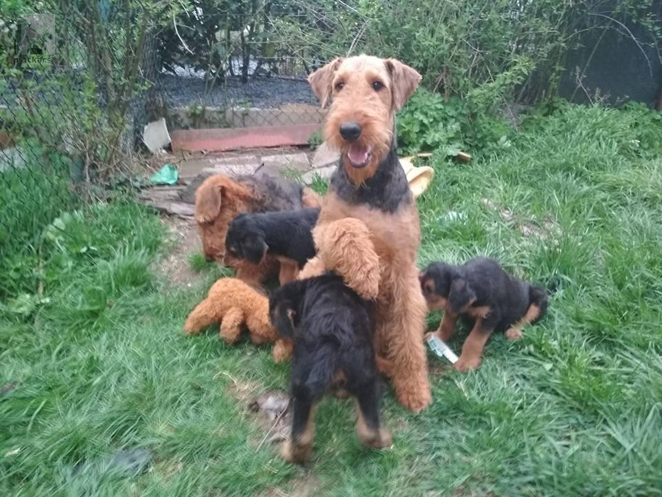 Maminka, teta a děti